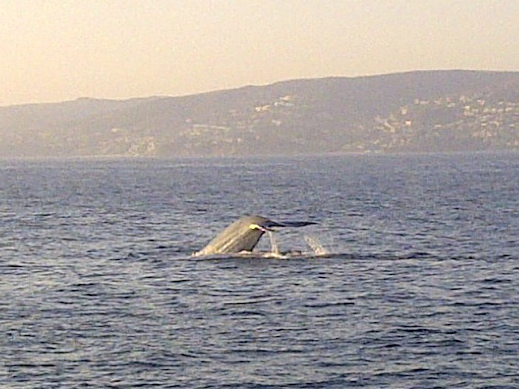 Whale Watching at Dana Wharf
